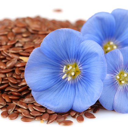 Flax Seed (Linseed) Oil